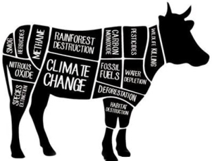 CLIMATE COW